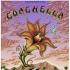 Coachella 07