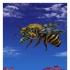 bee (big)