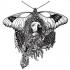 Christ Moth OG