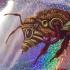 Bee - Big, Sparkley