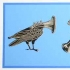Music Birds