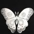 moth 3