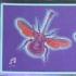 Music Butterflies, Foil