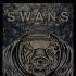 Swans (14 dc)